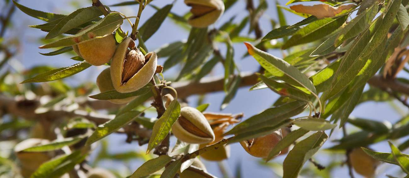4 Most Popular Spanish Nuts and Seeds