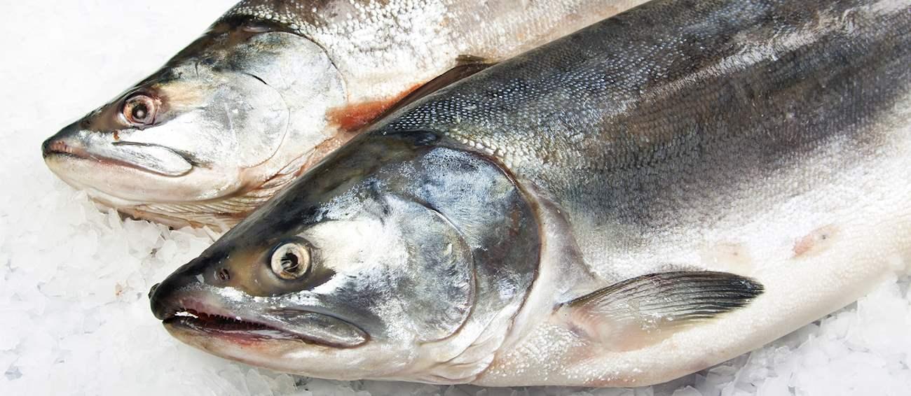 Top 4||Most Popular European salmon