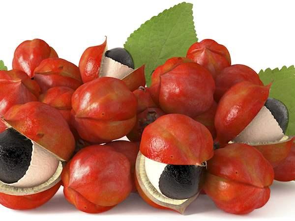 Guarana Local Berry From Amazonas Brazil Tasteatlas