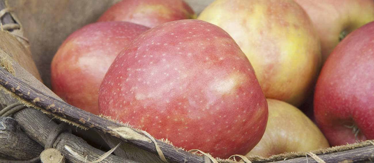 Top 7  Most Popular Australian fruits (types and products)