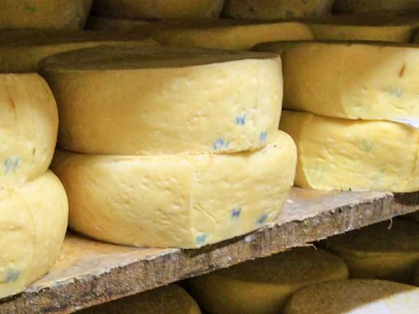 Pirotski Kačkavalj | Traditional Cheese From Pirot District