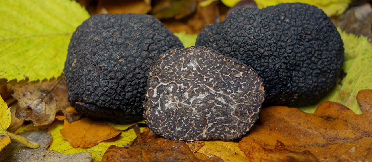 10 Most Popular Truffles in the World