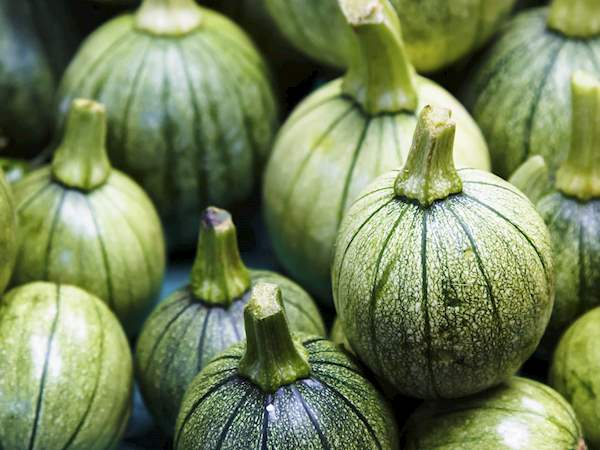 Calabaza | Local Vegetable From Mexico