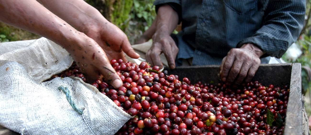 Huehuetenango Highland Coffee