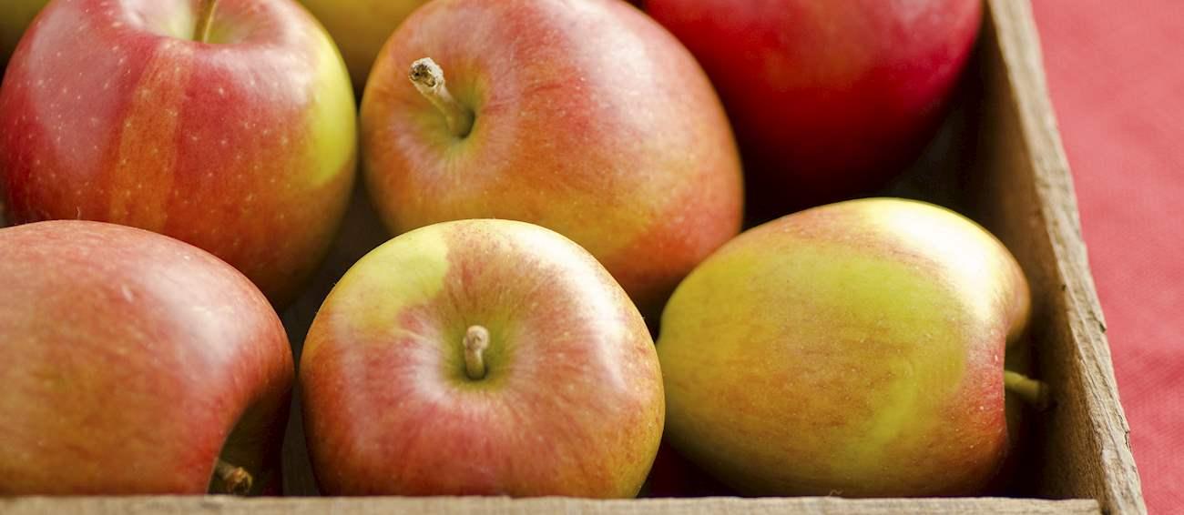 10 Most Popular New Zealand Apples