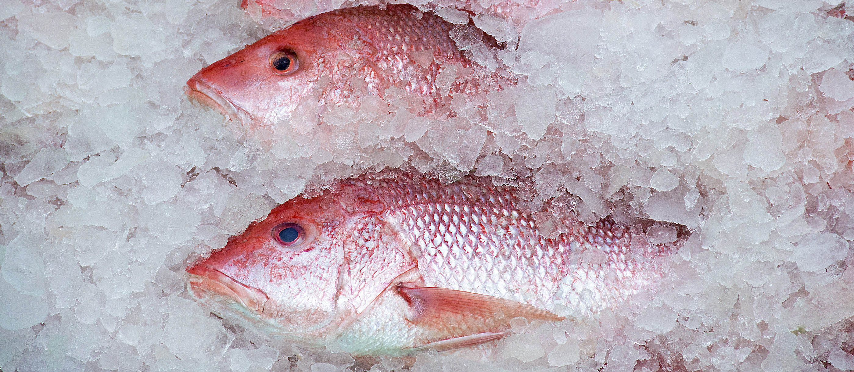 "Top Hegene Size 12 Top Colours Whitefish Whitefish Arctic Char Chiemsee Whitefish Viol!/"""